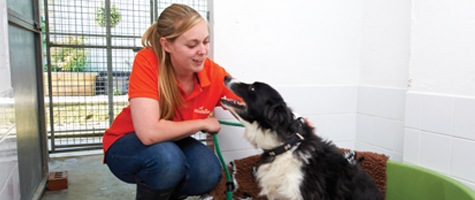 Inside a kennels at Chevening