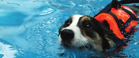 Dog Hydrotherapy Training Courses Uk