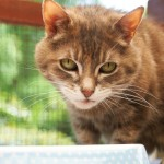 Cat in the Cattery at the Westerham site