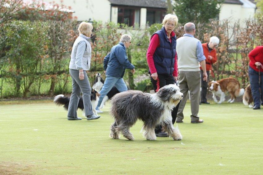 Robert Harlow Dog Training